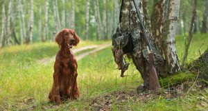 featured-best-hunting-dog-breeds